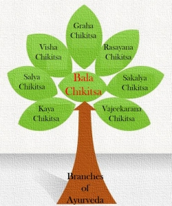 eight-branches-of-ayurveda